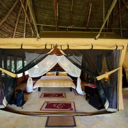 01-mara-timbo-camp-masai-mara-kenya-tent-with-kingsize-bed-at-daytime_800x533-800x500